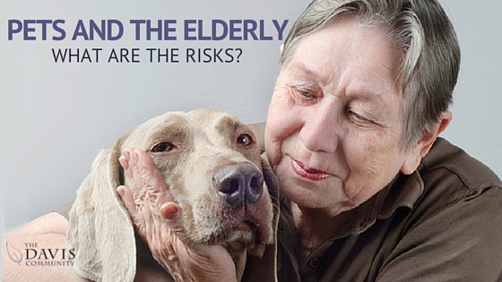 Pets and the Elderly - What are the risks?