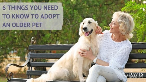 Adopting a senior pet? Here's some things to think about.