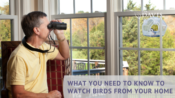 Begin the easy and fun filled hobby of bird watching!